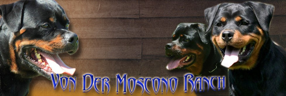 Rottweiler Puppies For Sale In Louisiana Rottweiler Puppy Alabama